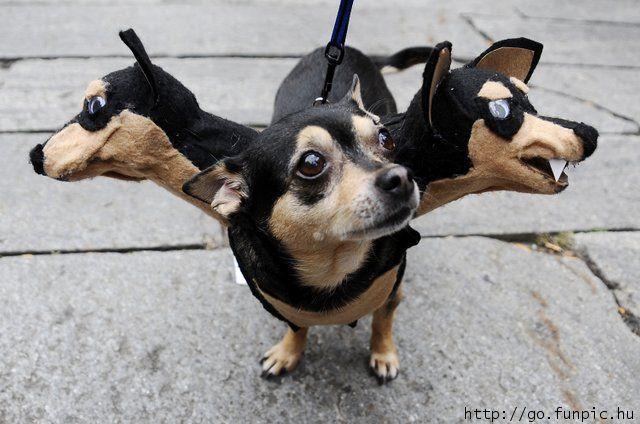 funny-dog-halloween-costume-ideas-cerberus
