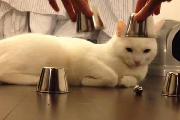 Hütchenspielkatze